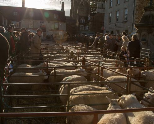 Sheep at the Uppingham Fatstock Show