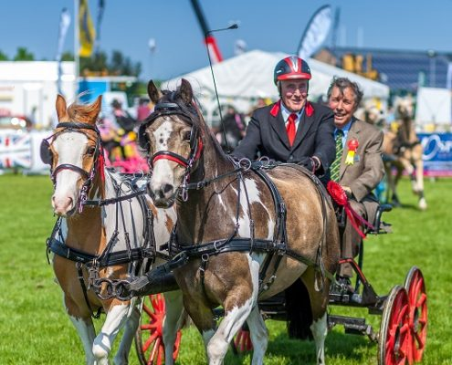 Horses and Scurry at the Rutland County Show