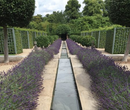 Water feature with lavender plants